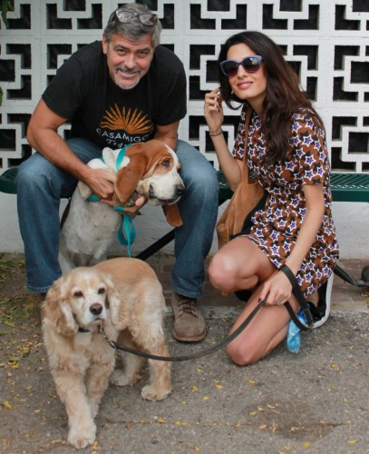 george-amal-clooney-dogs-millie-louie