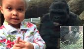 O gorila invata o pustoaica, sa faca gesturi obscene!