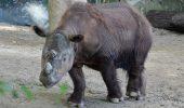 """""""Harapan"""", trimis in Indonezia pentru salvarea speciei"""