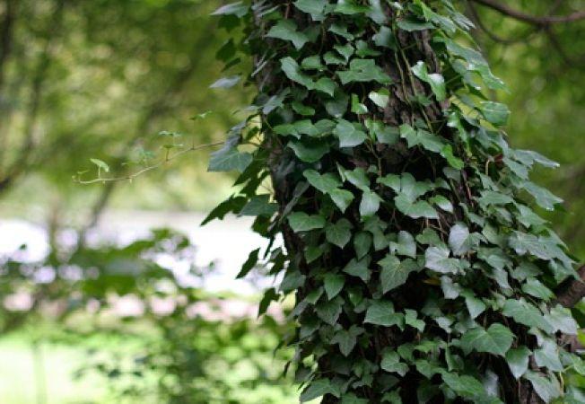 Atentie in aceasta perioada in special la ce plante for Planta decorativa toxica