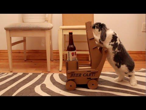 Iepurasul care-ti aduce berea!