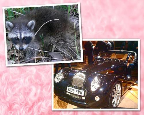 ASEMANARE UIMITOARE! Modele de masini inspirate, voit sau nu, din lumea animalelor!