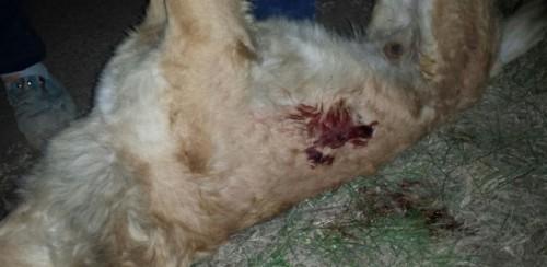 SOCANT: Caini impuscati in plina strada! In Romania! Bestia trebuie sa plateasca pentru viata cainilor pe care i-a omorat!
