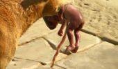 Cu adevarat EMOTIONANT! S-a aflat povestea din spatele fotografiei in care un caine cara in gura un nou nascut!