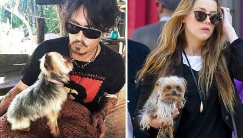 Instanta australiana, sfidata de sotia lui Johnny Depp, in procesul privind introducerea ilegala in tara a cainilor Boo si Pistol