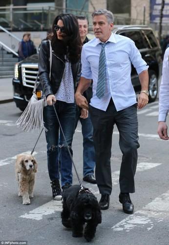 """Ce nu fac unii oameni din dragoste pentru animale? George Cloony si-a """"uns"""" pantofii cu mici chiftelute de curcan pentru a fi placut de primul sau caine adoptat dintr-un adapost!"""