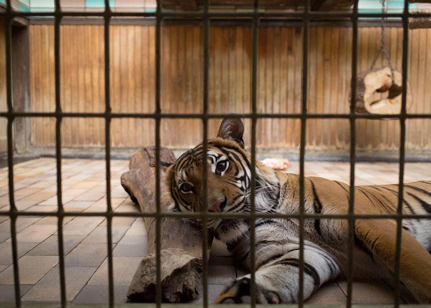 la zoo1