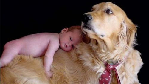 Viata alaturi de animale – efect protector impotriva astmului la copii