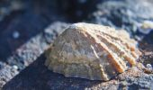 O vietuitoare marina, posesoarea CELUI MAI PUTERNIC MATERIAL BIOLOGIC de pe pamant!
