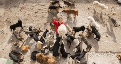 Si-a cheltuit intreaga avere pentru salvarea cainilor vagabonzi! Vezi ce a facut acest chinez cu banii!