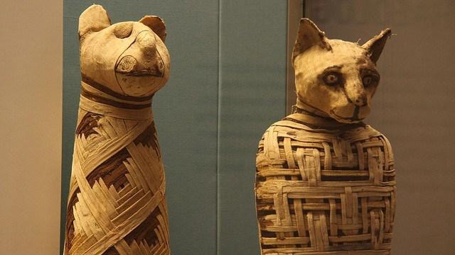 mumie-pisica