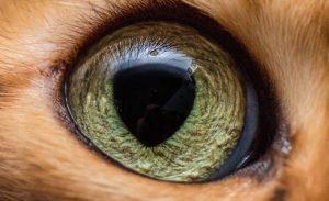 Cum vad animalele mediul inconjurator?