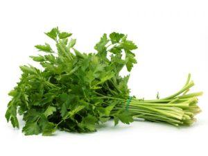 ATENTIE la ce plante aveti in apartament! Puteti otravi pisica! Daca mananca prea mult dintr-o planta toxica, poate chiar sa moara!