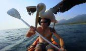 UIMITOR! Ce a facut acest om pentru un pelican!