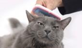 pisica matreata