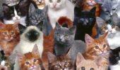 Cuplul UCIGAȘ! Omoară cu sânge rece felinele care le ADOPTĂ! DETALII ȘOCANTE! VIDEO
