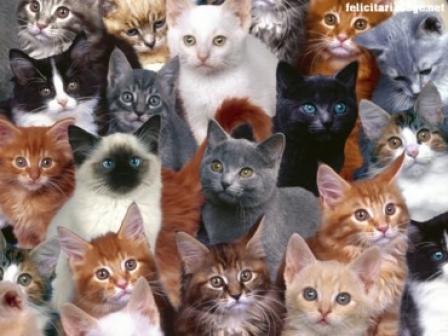 pisici1