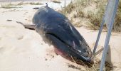 rar balena