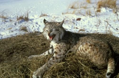 Animale din Romania, pe care copiii le vor stii doar din fotografii!
