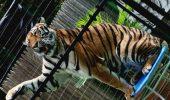 Hawaii, primul stat american care va interzice folosirea animalelor salbatice pentru divertisment