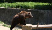 """In Harghita, populatia de ursi este de patru ori mai mare decat """"numarul optim"""". Pagubele produse de acestia sunt insemnate, iar oamenii se tem sa iasa seara din case…"""