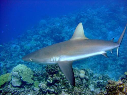 SOCANT si IREAL! Un rechin a sarit pe placa unui surfer in Australia