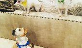 Aplicația care te ajută să alegi câinele potrivit: răspunde la zece întrebări cheie