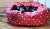Ce tipuri de paturi exista pentru caini?