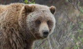 atac urs