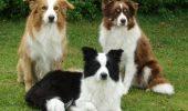 Care sunt cei mai deștepți câini din lume