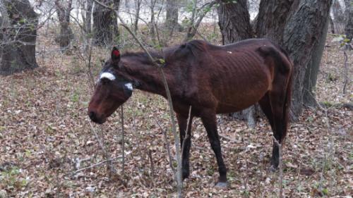 Situatie halucinanta in Babadag, mai multi indivizi au omorat un cal in bataie
