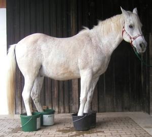 """A venit frigul! Cum se previne """"febra noroiului"""", la cai?"""