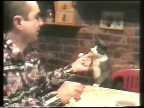 ADORABIL! Priviti cum cere aceasta pisicuta de mancare!