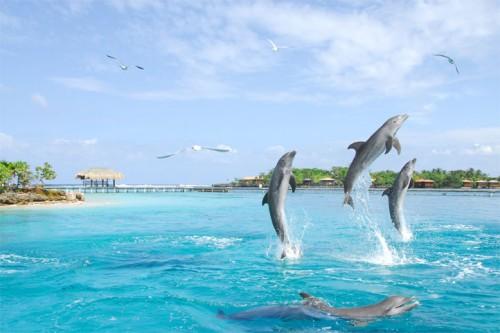 Vrei o balaceala alaturi de delfini? Uite unde iti poti petrece Revelionul!