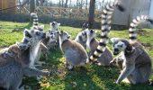 Magnifica lume de la Zoo Sóstó, Ungaria