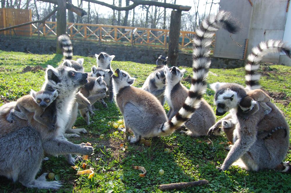 cap sozto zoo