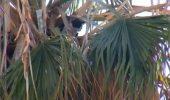 Chinul unei feline: O pisica a stat DOUA SAPTAMANI intr-un palmier, pana a fost salvata!