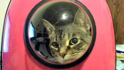 Cu mai putin de 100 de dolari, si pisicutele pot deveni astronauti!