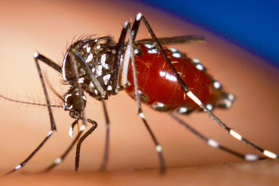 Переносчики- комары. Смертельный вирус подобрался к южной границе Молдовы (видео)