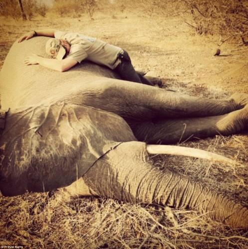 Printul Harry a emotionat o lume intreaga! Nu l-a vazut nimeni, vreodata, atat de afectat in legatura cu ceea ce li se intampla animalelor salbatice!