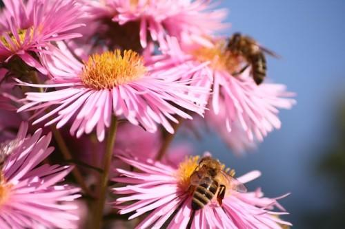 Nu toate meritele polenizarii apartin albinelor! Daca nu sunt daunatoare, TOATE insectele trebuie protejate!