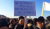 INEDIT! Ciobanii au protestat, la Bucuresti, in apararea cainilor de la stana!