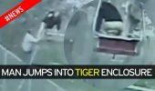 S-a aruncat de buna voie in tarcul tigrilor!