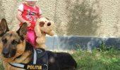 Inca un erou a murit! GOM, cainele de urma al Politiei Bihor nu mai e!