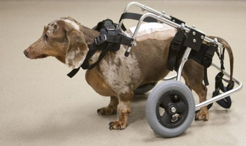 handicap4