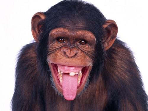 Superinteligentă! Uite cum a încercat o maimuță să EVADEZE DE LA ZOO! Turiștii au rămas MASCĂ