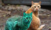 De ce nu o pisicuta verde?