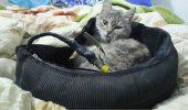 ISIS se foloseste de pisici pentru recrutarea adeptilor!