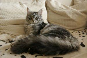 Pisica ta stă în patul tău? TREBUIE să citești neapărat acest articol