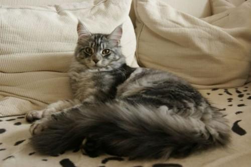 Pisica ta doarme în patul tău? TREBUIE să citești neapărat acest articol